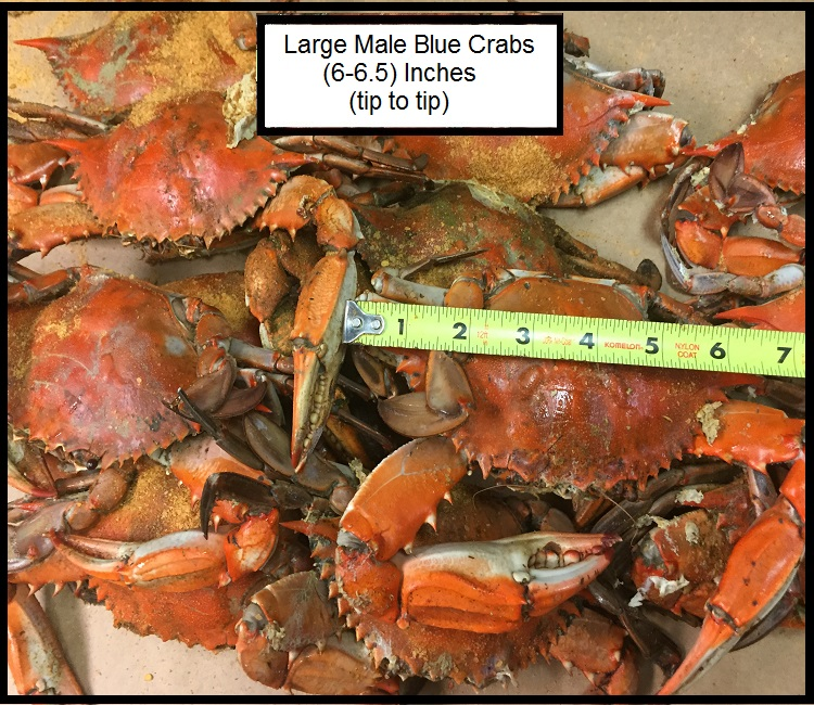 3) Dozen Small Male Maryland Hard shell Blue Crabs Fresh