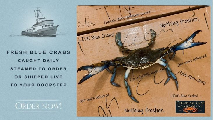 Fresh blue crabs  caught daily  steamed to order  or shipped live to your doorstep