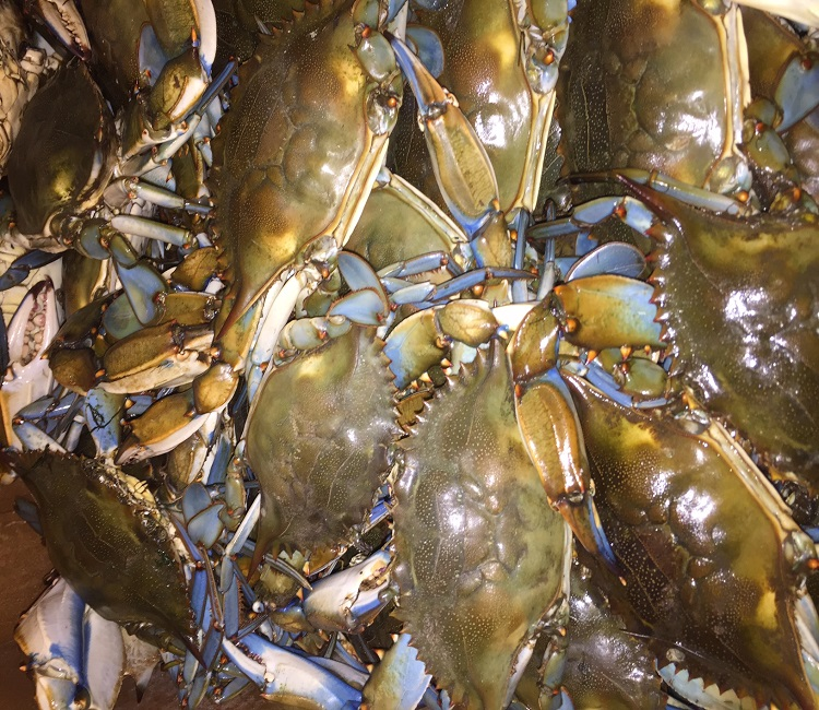 LIVE) - MD Hard Shell Blue Crabs